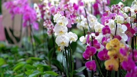 Exposition Internationale d'Orchidées et plantes d'ornement