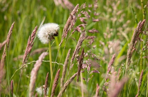 À la découverte des herbes folles du Marais en été